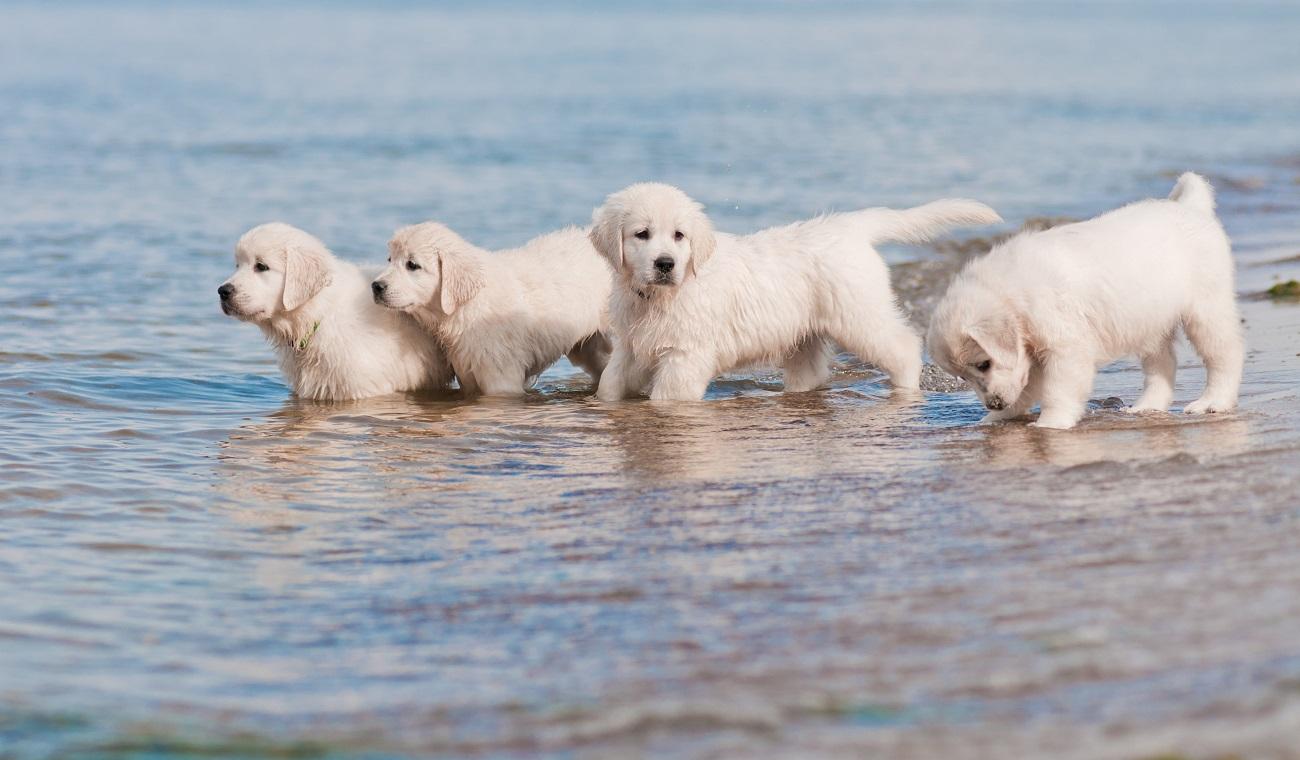 Mooie hondenstranden in Nederland en Europa